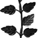 バラの葉|既製品